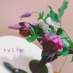 切り花/アレンジ/チューリップ/ベルテッセン/クレマチス/花 花器を変えて