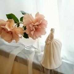 薔薇/ジュリアン/表参道/阿部太一さんの陶器/令和の一枚/雑貨/... 凜とした立ち姿や、物腰の柔らかさが白陶器…
