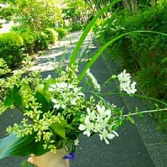 草花の花束/花束/切り花/グリーン いつもハサミをもって散歩へ…危ない人 笑