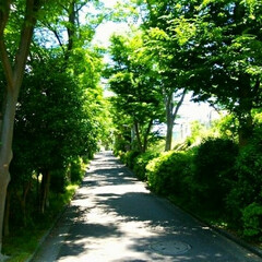 グリーン/緑道/森林浴 自宅の周りは緑道がたくさんあります。 色…