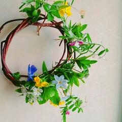 ハナニラ/菜の花/からすのえんどう/リース/生花 野草のリース2 前回の写真光が入りすぎて…