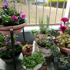リメ鉢/寄せ植え/ハンドメイド こんな感じになってきました。 3枚目はな…