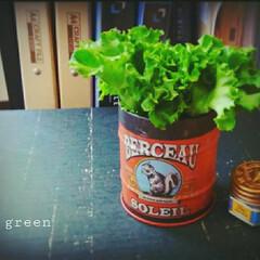 グリーン/セリア/缶 セリアの缶です で、このグリーンは、、 …(1枚目)