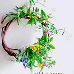 ハナニラ/ホトケノザ/菜の花/からすのえんどう/野草/リース 野草のリース