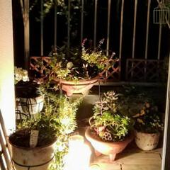 暮らし/お家時間/ベランダガーデニング/ベランダライトアップ …夜のベランダをライトアップすると 昼間…