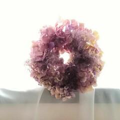 スモークツリー/紫陽花/雨季ウキフォト投稿キャンペーン/ハンドメイド/風景/暮らし 今年は、ピンクのスモークツリーとピンクの…