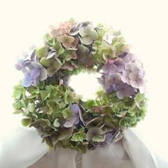 切り花/生花/秋色紫陽花/ハンドメイド/紫陽花リース 秋色紫陽花です。 毎年、8月あたりまで待…