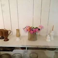 大好きな野生の菊/器/カフェ/秋/おでかけ 大好きなカフェで、器の展示会とワークショ…