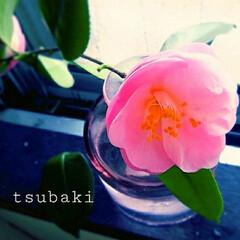 切り花/生花/花 咲きました😊