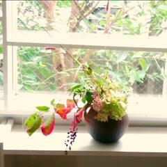 秋の花/生花/おでかけ/高田かえさんの花器 外の景色と溶け合っている感じが好きです✨
