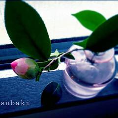 切り花 窓辺でわびさび…咲くのが楽しみ