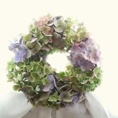 紫陽花/雨季ウキフォト投稿キャンペーン/ハンドメイド/風景/暮らし 去年作った紫陽花のリースです