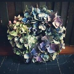 生花/秋色紫陽花/ハンドメイド/紫陽花リース 秋色紫陽花 渋めのphotoです。