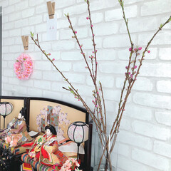 海外インテリア/梅/花のある暮らし/ひな祭り/ピンク/住まい お雛様のところには梅を。 梅はなかなか咲…