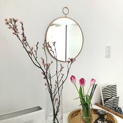 玄関インテリア/玄関/啓翁桜/チューリップ/桜の枝/花のある暮らし/... 玄関の花を入れ替えました。(一昨日に😅)…