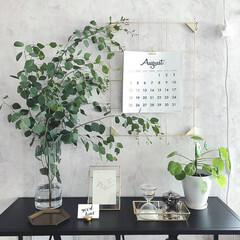 ユーカリポポラス/緑のある暮らし/セリア/雑貨/イケア/ニトリ/... ユーカリポポラスの枝。 長持ちしてほしい…(1枚目)