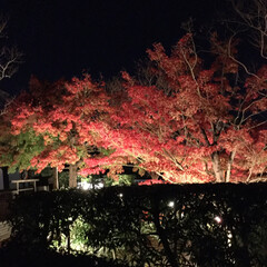 風景/おでかけ 昨夜、宇治の平等院ライトアップ見に行って…(4枚目)