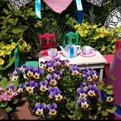 ガーデニング/ガーデンコーナー/ティーパーティー/アリス/アリスインワンダーランド/割れた鉢/... ガーデンシリーズ♪  割れた鉢はマッドハ…