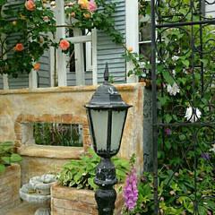 バラ アルケミスト/つるバラ/ルーバー/パーゴラdiy/モルタル造形/お庭改造/... お庭改造中 モルタル造形で作りました。バ…