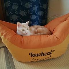 バル/ペット/猫/犬 「ボートに乗ってる気分にゃ。秋だから旅し…