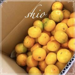 旬の果物/フード ★ ★ 田舎の叔母から 沢山みかんが届い…