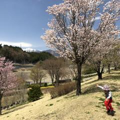 晴天/公園/桜/ポカポカ陽気/お散歩/元気/... ポカポカ陽気で、子供も元気に遊び尽くしま…