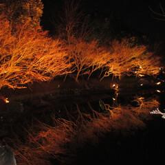 旅/ライトアップ/風景/おでかけ ライトアップがとても綺麗でした。