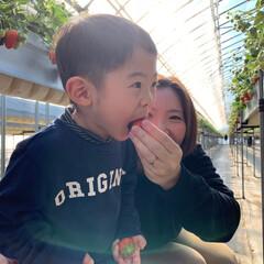 冬/幼児期ママ/幼児/息子大喜び/息子/親子/... だ〜い好きなイチゴ🍓 イチゴ狩りで、た〜…
