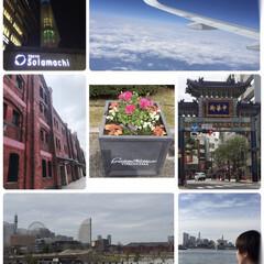 3月/巣立ちの春/横浜/春の一枚/おでかけ/旅行/... 3月の思い出🤳  就職のため、息子を遠距…