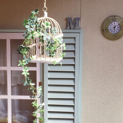 わたしの手作り/雑貨だいすき/窓枠DIY/フェイクグリーン/掛け時計/鳥かご 鳥かご🐧 フェイクのシュガーバイン🍀を …