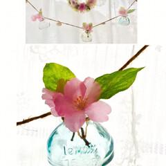 ガラスボトル/ガーランド/小さな春/出窓/桜/リース 桜色🌸  桜の開花宣言は出たものの 今日…