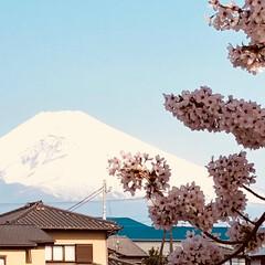 富士/さくら