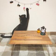折りたたみテーブルリメイク/折りたたみテーブル/黒猫/ハロウィン雑貨/ハロウィン/100均/... 折りたたみテーブルをリメイクしました♪ …