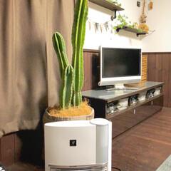 柱サボテン/リビング/プラズマクラスター/加湿器/セラミックファンヒーター/お気に入り 加湿が出来るヒーターを買いました😊🎵暖房…