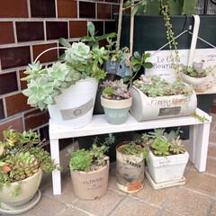 エクステリアカラー ホワイト  水性着色剤 ウッドアトリエ | 和信ペイント(Washi Paint)(ニス、ステイン)を使ったクチコミ「端材を使って、多肉植物を置く棚を作りまし…」