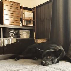 ラグ/保護犬/LIMIAペット同好会/ブラウンインテリア/カフェ風インテリア/リビング リビングのラグを秋冬用のものに変えました…