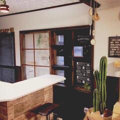 観葉植物 柱サボテン8号+バスケット鉢カバー(観葉植物)を使ったクチコミ「去年作った、キャットウォーク付きの窓枠で…」(1枚目)