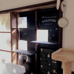 観葉植物 柱サボテン8号+バスケット鉢カバー(観葉植物)を使ったクチコミ「去年作った、キャットウォーク付きの窓枠で…」(3枚目)