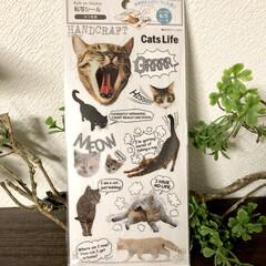 ねこ雑貨/猫好き/転写シール/100均/セリア/雑貨 セリアで買った転写シール🐈💕 猫好きには…