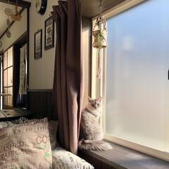 内窓/猫/住まい/おすすめアイテム/暮らし 少しだけ開けた内窓から外の景色を見ていま…