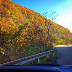 秋晴れ/山/田舎暮らし/紅葉/秋 どこかに出かけたわけではなく、こんな綺麗…