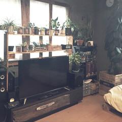 多肉ちゃんの棚/テレビ台diy/観葉植物のある暮らし/フォロー大歓迎/DIY/家具/... おはようございます☀ 我が家のソファーと…