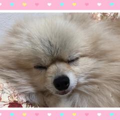 まりん/眠い💤 眠い💤