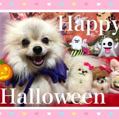笑顔/おやつ/不機嫌/まりん/ハロウィン/100均deハロウィン ハッピーハロウィン⁉️ まりんは服を着せ…