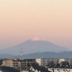わんこ大好き/パン🥖/まりんのシャンプー/朝の富士山🗻 おはようございます。 昨日の朝の富士山🗻…(2枚目)