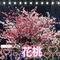 チューリップ🌷/桃の花/かりん/花桃 お隣の花桃の花は素晴らしい💕 我が家の花…