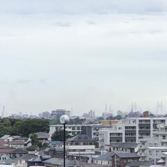 木立性ベゴニア/カーネーション/つばさ橋/横浜ベイブリッジ おはようございます🎶 今朝も曇り空です。…