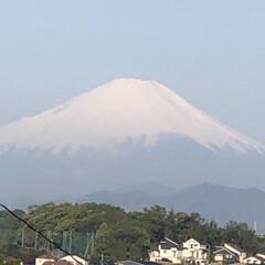 お散歩/しょうぶ/まりん/電線/富士山🗻 こんばんは。 先週の土曜日に撮った富士山…