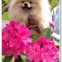 懐かしい/幼いお顔/7年前の写真/10年/我が家にきた記念日/保護犬 今日はまりんが我が家にやってきた記念日で…