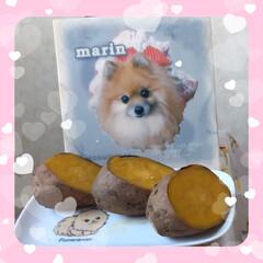 まりん/甘い/安納芋/大好きなお芋/マリンの10回目の命日 今日はマリンの10回目の命日です。 マリ…